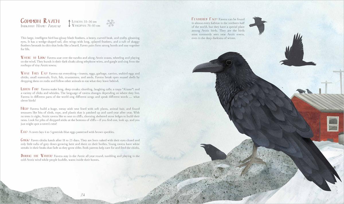 spread_raven